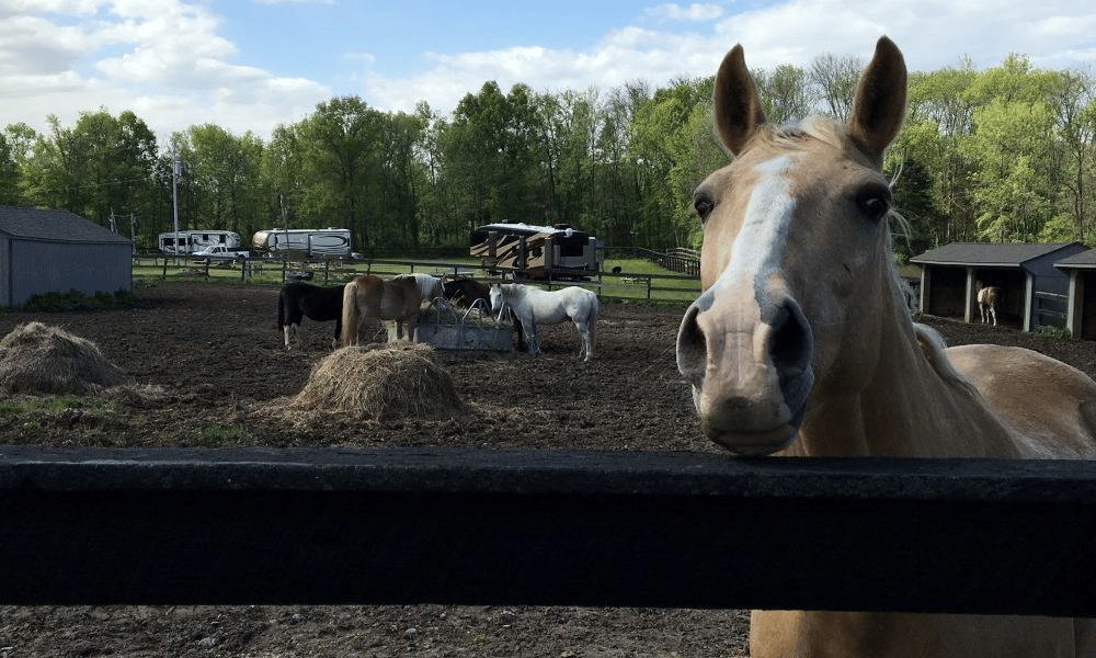 RV Parks & Campgrounds – Becoming an Equine Park